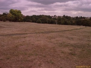 The heavily mown 'amenity grassland' of the former Pitch and Putt course by Bursted Wood, Barnehurst, quite unnecessarily leaves far too little for our declining Bees to feed on
