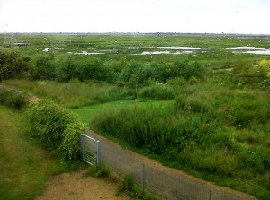 View out over the reserve enjoyed by RSPB Rainham's visitor centre staff