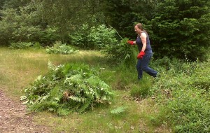 Kim Ilsey clears Bracken on the heathland