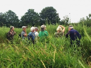 Some of the group getting up close and personal with the Marsh Sow-thistles.  Even botanists have to look skywards sometimes .... (Photo: Karen  Sutton).