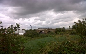 The Slade Green to Dartford railway embankment and bridge over Thames Road, adjacent to Thames Road Wetland, provides a potential habitat corridor out to the marshes, and into Kent. (Photo: Chris Rose).