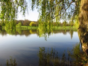 The Lake at Danson Park