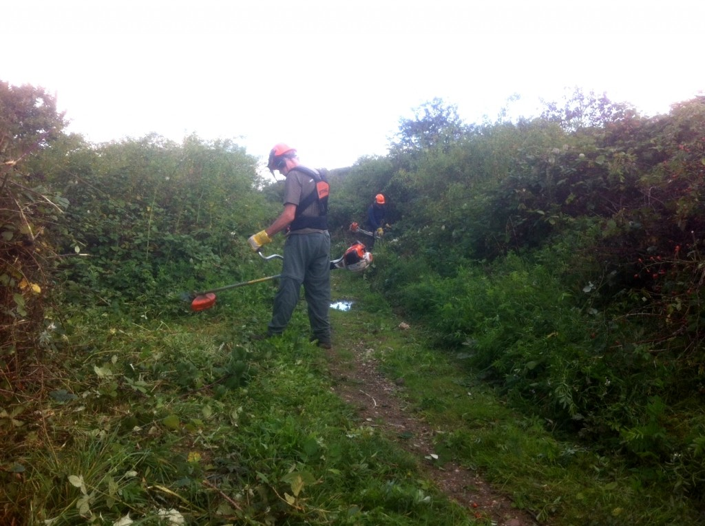 Strimming back encroaching Brambles along a footpath. This will have the added benefit of  opening up more basking 'edges' for reptiles.