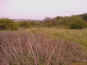Erith Quarry, one of a handful of quality scrub habitats in the Borough. Large contiguous sites like this are far better for wildlife than small fragmented ones.