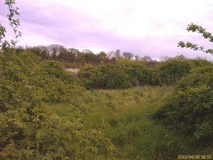 Erith Quarry, showing important scrub habitat that will be lost if 'development' is approved by Bexley Council.