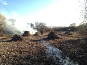 Numerous piles of reed were generated during the 3 hour session. (Photo: Karen Sutton)