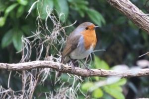Robin (Photo: John Arnold)