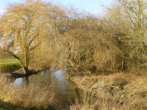 The River Cray approaching the boundary of Hall Place and Crayford Rough. (Photo: Brenda Todd)