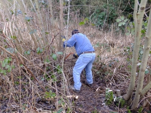 Getting stuck in to coppicing work at Ruxley