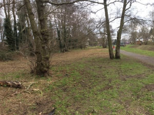 A swathe of bramble and other scrub has been completely strimmed away all along the margin of Hollyoak Wood (paler area to left) , despite its importance to insects and birds, and contrary to Council policy on woodland margin management. (Photo: Chris Smith)