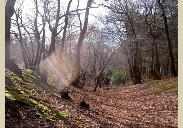 Joydens Wood. ph Woodlands Trust
