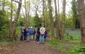 Bexley RSPB and Lesnes Abbey Conservation Volunteers members on the bird walk in the woods (Photo: Brenda Todd)