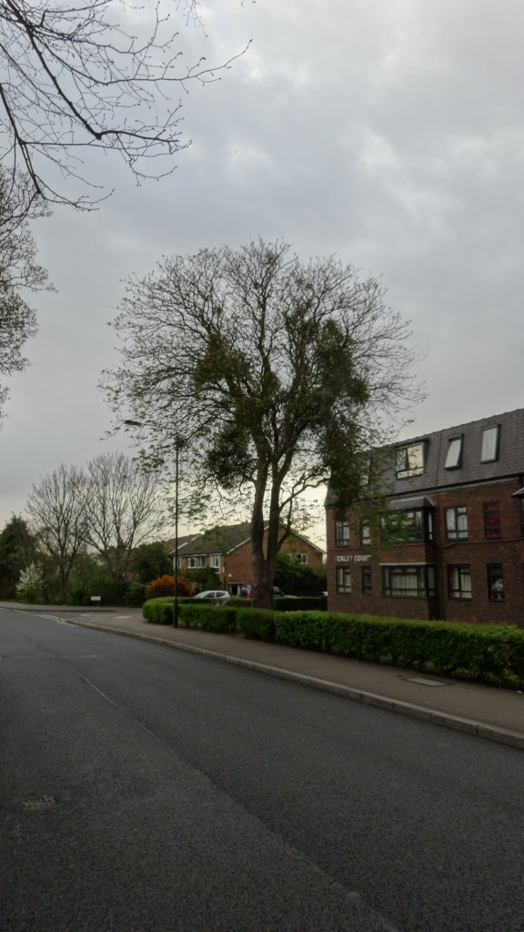 Tree in Main Road, Sidcup