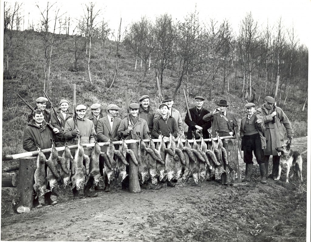 Fox culling Joydens Wood 1950s. Gamekeeper, Mr William Barrett third from right with horn.