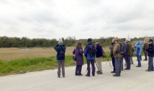 BRSPB members out on the marshes (Photo: Brenda Todd)