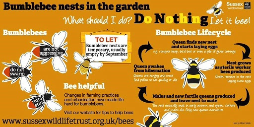 Bumble bees in Gardens