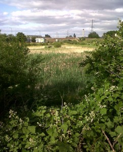 Thames road Wetland basks in a brief sunny interlude on a late June afternoon. (Photo: Chris Rose)