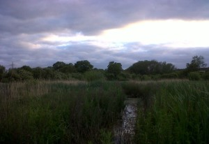 A brooding sky over Thames Road Wetland as darkness approaches. (Photo: Chris Rose)