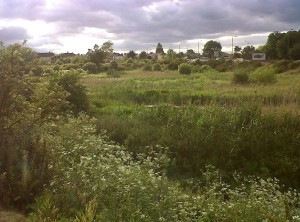 Thames Road Wetland looking west. Allowing a modest amount of Willow scrub to develop has attracted Reed Bunting and Sedge Warbler. (Photo: Chris Rose)