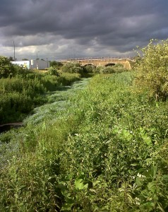 The river Wansunt at Thames Road Wetland under a brooding  sky, but on a very hot day. (Photo: Chris Rose)