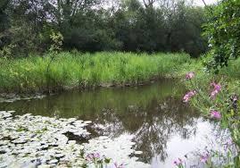 Ruxley Gravel Pits.  Kent Wildlife Trust
