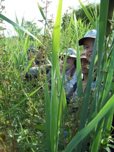 QWAG members enjoy the 'ack to nature' experience in tall vegetation at the west end of the site. (Photo: Pamela Zollicoffer)
