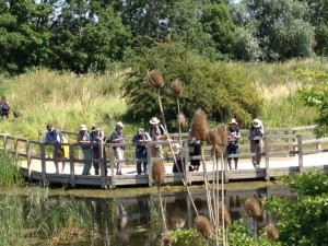 Attendees gathered on the Southern Marsh pond boardwalk to get superb close-up views of the considerable Dragonfly and Damselfly action.