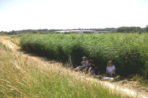 The volunteers from Lesnes Abbey Woods clearly prefer shadier habitats, and took advantage of a Reedbed to take some respite from the blazing sun!