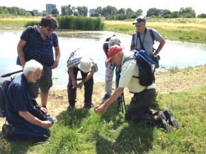 Rodney Burton explains the finer points of plant identification at the Southern Marsh wader scrape.