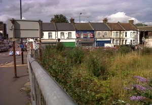 Former 'Harroew' pub site in Abbey Wood - a haven for wildlife amongst the grey of paving and concrete.