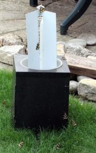 Ralph Todd was amazed to find numerous Jersey Tiger moths around his garden moth trap (Photo: Ralph Todd)