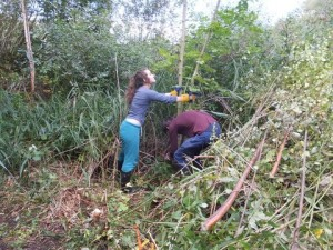 Taking  out unwanted trees at Ruxley Gravel Pits