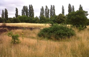 80% of Sites of Importance for Nature Conservation in Bexley, such as this one at Barnehurst Golf Course, so not have a management plan. Now, alarmingly, a revised grounds maintenance contract has been put out to tender, apparently without any biodiversity or nature conservation input. (Photo: Chris Rose)