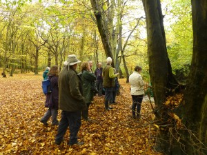 The group admiring autumn leaf colour in Bexley Woods (Photo: Brenda Todd)