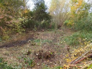 The outcome of Willow coppicing work at Ruxley this month.