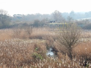 On a gloriously sunny day at Thames Road Wetland, with the frosted Reed seed heads lit up silver, the local horses sunbathe on the distant Sewer Pipe Embankment as a freight train rumbles by. (Photo: Michael Heath)
