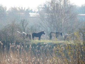 A zoomed-in shot of the horses sunning themselves. (Photo: Michael Heath)