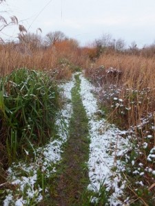 Ruxley Snow and path 17th Jan 2016