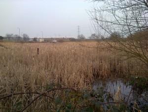 Thames Road Wetland, looking east. (Photo: Chris Rose)