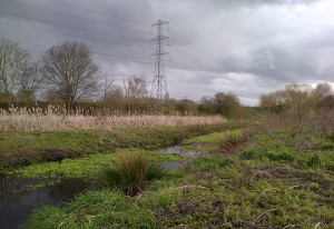 The River Wansunt at Thames Road Wetland, looking south. (Photo: Chris Rose)
