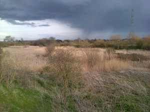 Thames Road Wetland looking east. The muted winter straws of Reed and Reedmace bathed in sunshine as spring rainclouds cast  shadows further to the south. (Photo: Chris Rose)