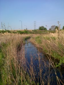 The main ditch at Thames Road Wetland. (Photo: Chris Rose)