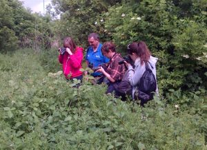 Hall Place hiders (left to right) Lisa and Martin Burke, Jean Bufton and Donna Zimmer photographing insects at Thames Road Wetland (Photo: Chris Rose)