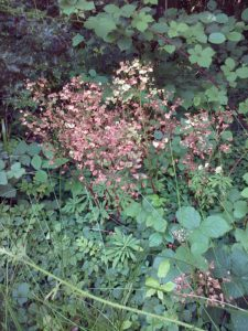 There were a number of gone-over flower heads of Wood Spurge in evidence. (Photo: Chris Rose)