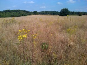Field by the A2, south of Churchfield Wood (Chris Rose)