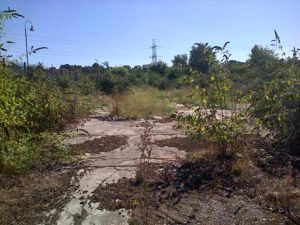 This brownfield habitat in the centre of Crayford was hosting a Clouded Yellow butterfly on 11th September 2016. (Photo: Chris Rose)